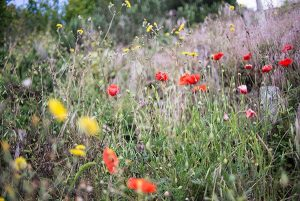 closeup of red, yellow, greyish blue wildflowers in green field by Stephanie Krist on UnSplash