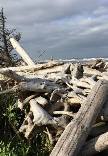 Pile of driftwood on the beach next to the whitecapped water on a cloudy day.